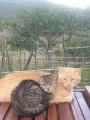 I nostri gatti